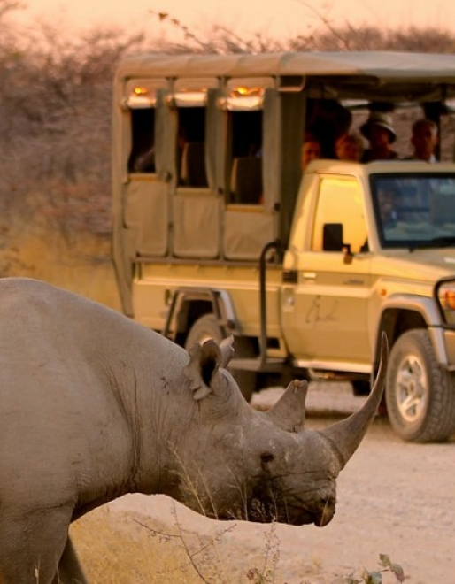 An African Culinary, Wildlife and Fly-in desert Adventure